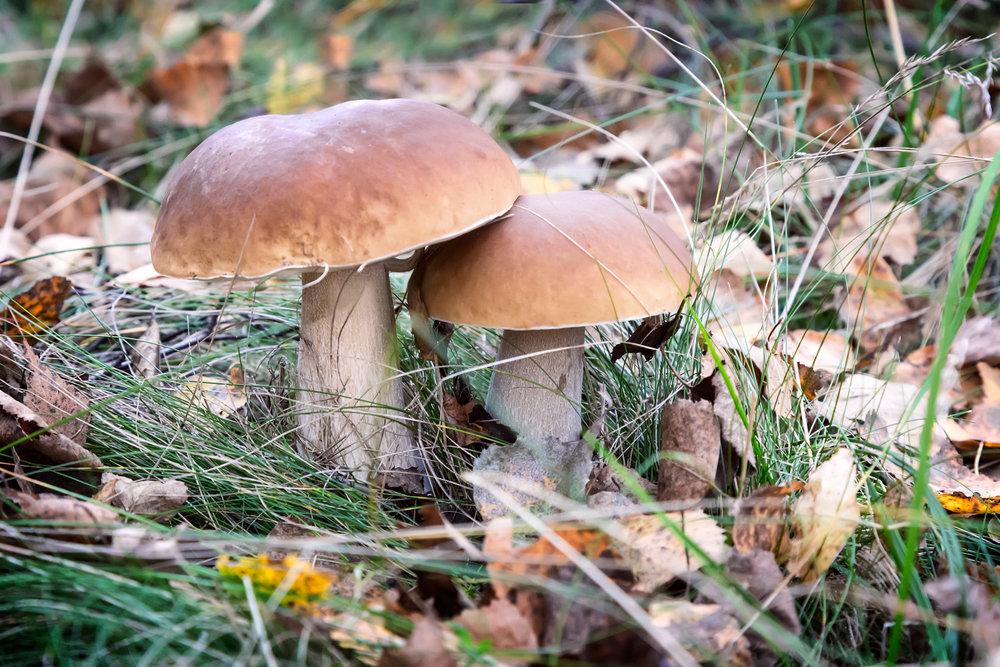 грибы_лес_радиация
