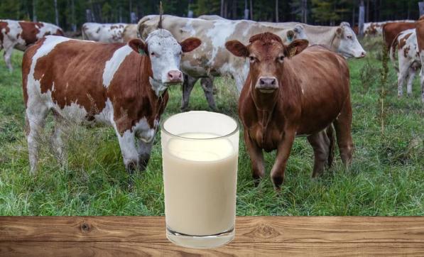 фермеры_молоко_государство_субсидии