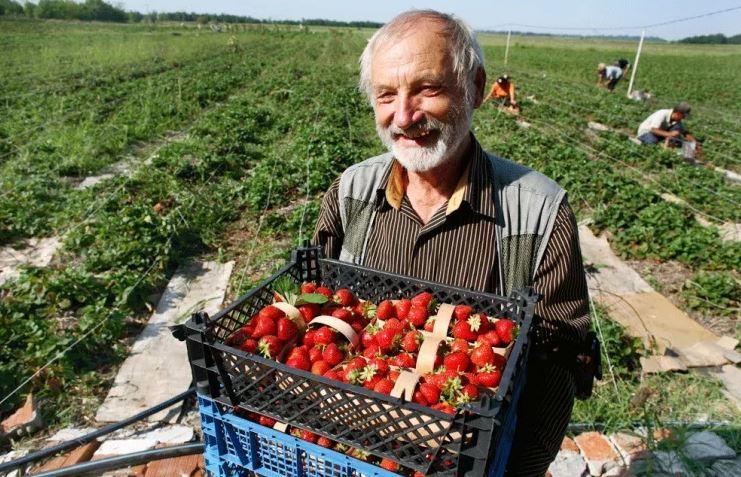 фермеры_новости_апк_реализаци_продукции_фермерские_продукты_закон
