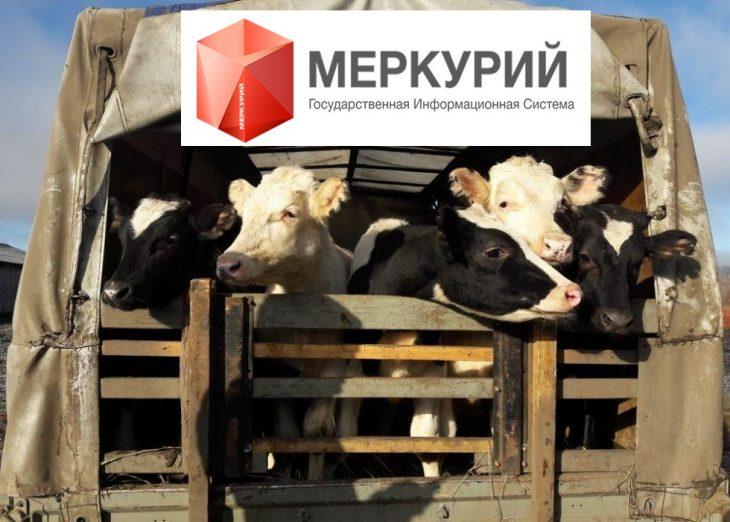 гис меркурий_штрафы_ветеринария