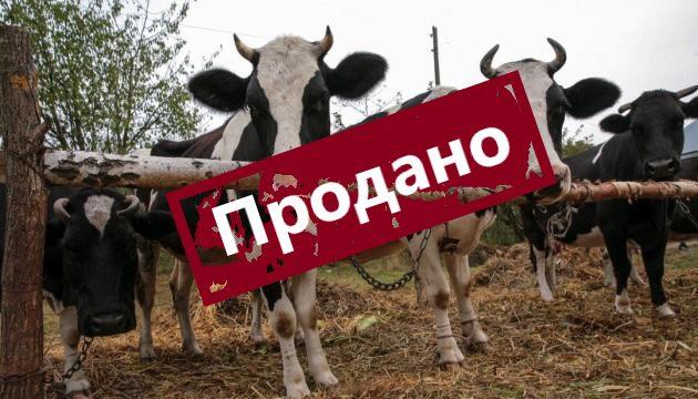 курган_экономика_фермеры_сельское_хозяйство_продажи
