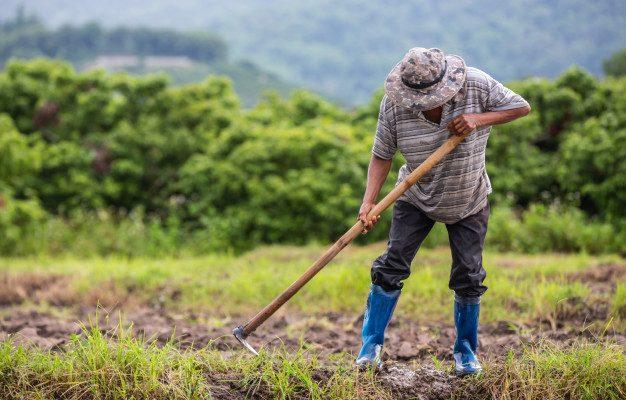мигранты_правительство_россия_сельское_хозяйство_работа_общество