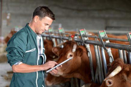 ветеринария, Беларусь, информационная система, сельское хозяйство, постановление, Совмин,