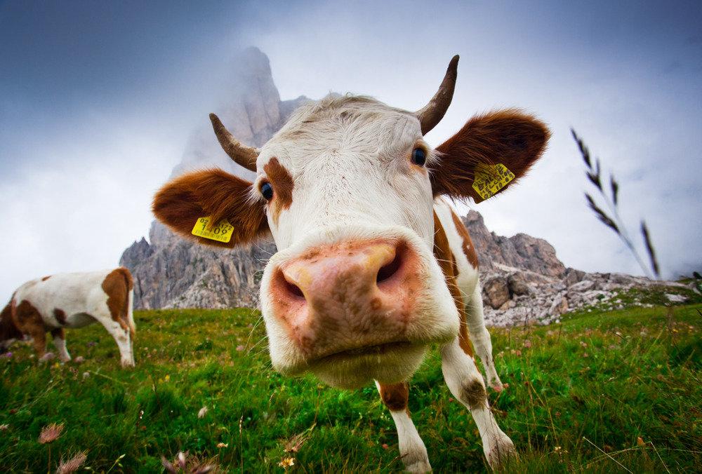 животноводство_фермеры_юридические_лица_предприниматели_законопроекты_законы