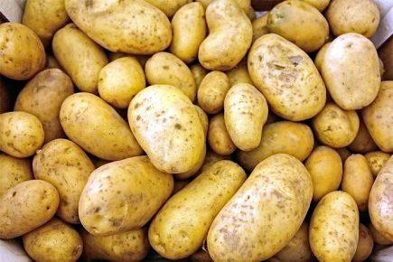 картофель, продукты, пестициды, опасность для здоровья,